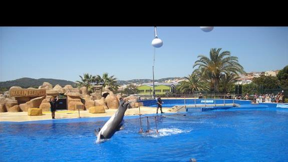 Wycieczka lokalna do  MARINELADU - pokaz tresury Lwów \morskich i delfinów w cenie - uwaga  na terenie aquaparku wysokie ceny napojów i jedzenia