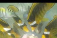 """Hotel The Three Corners Sea Beach - karmienie rybek """"z reki"""" w morzu przy plazy hotelowej:)"""