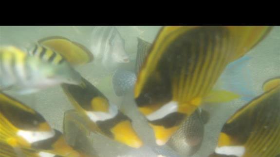 """karmienie rybek """"z reki"""" w morzu przy plazy hotelowej:)"""