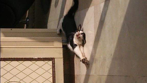 Koty na stolówce lub lobby