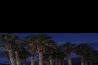 Hotel Carolina Mare - HOTEL