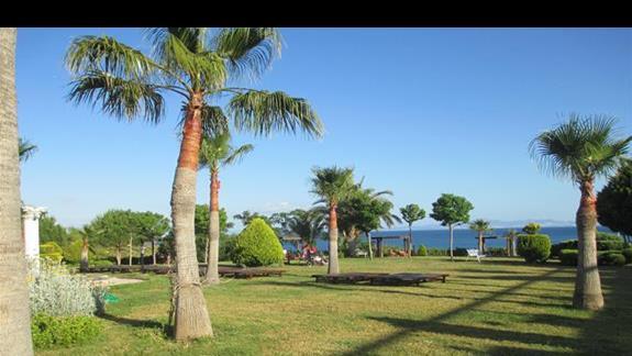 Didim Beach Resort ogród