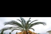 Hotel Saphir Resort - ogród