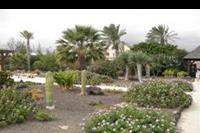 Hotel Elba Carlota - Ogród w hotelu Elba Carlota