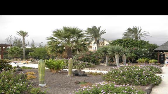 Ogród w hotelu Elba Carlota