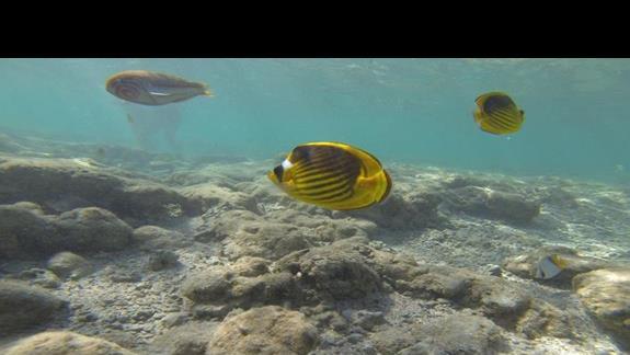 Pod woda przy brzegu ...co dopiero by bylo na rafach :(