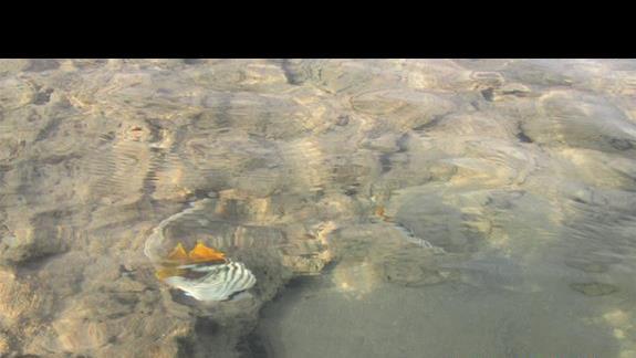 kolorowe rybki tuz przy brzegu