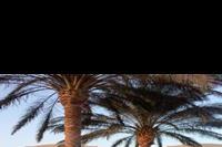 Hotel Ali Baba Palace - teren hotelu Ali Baba zdobią liczne palmy