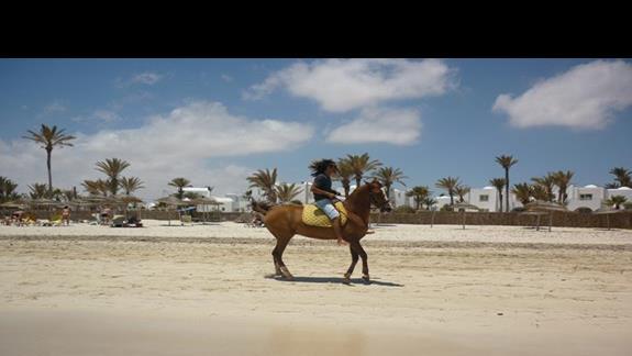 Jazdy konne wielbladem i osiolkiem po plazy :)