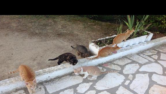 Koty przy jadalni