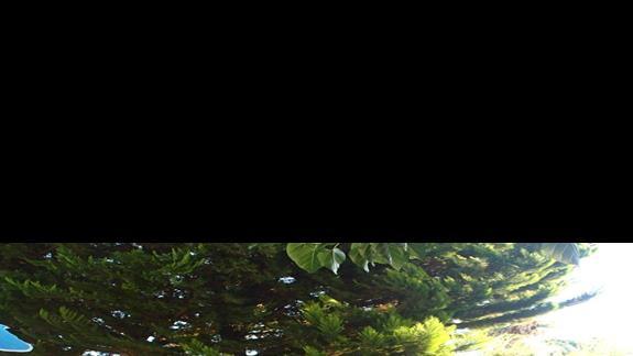 Alejka w ogrodzie w hotelu Palm Beach