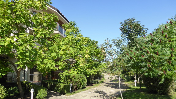 Ogród w hotelu Laguna Beach