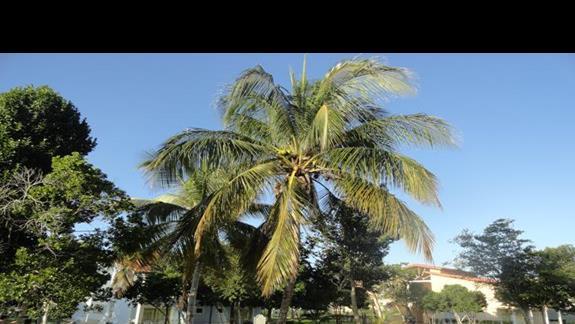 Playa Pesquero - ogród