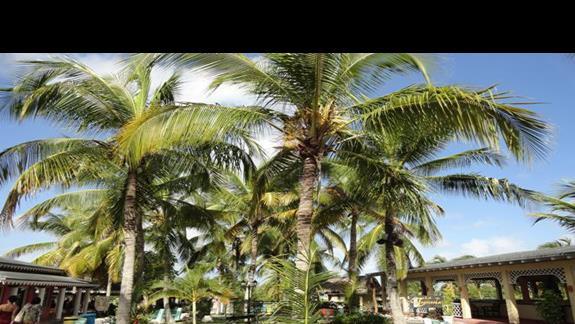 Playa Pesquero - restauracje tematyczne