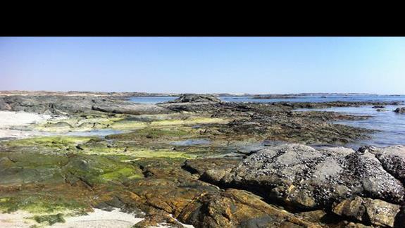 Skaliste plaze w okolicy Mirbat