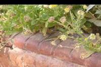 Hotel Ali Baba Palace - jaszczurka w kwiatach