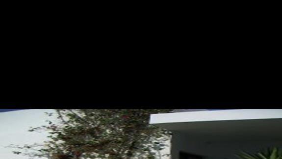 gniazda ptasie w bungewilli przy stolówce