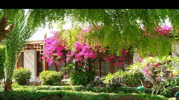 Ogród i wejście do recepcji