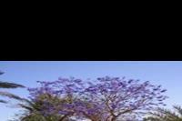 Hotel Magawish Village Resort - Niebieskie drzewo