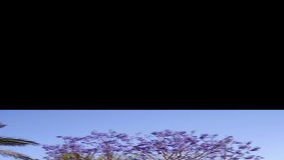 Niebieskie drzewo
