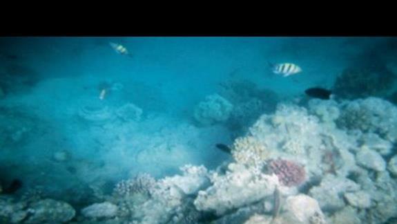 Rafa koralowa przy hotelowej plazy