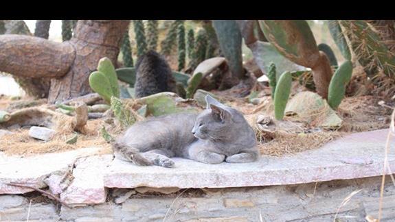 Kot w okolicy meczetu