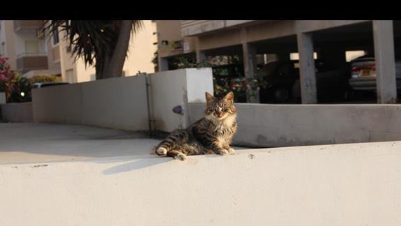 Kot w Larnace