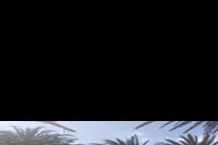 Hotel Ifa Interclub Atlantic - ogród