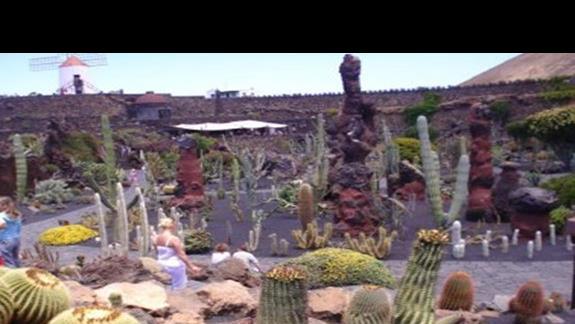 Ogród kaktusów Cezara Manrique