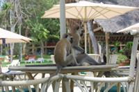 Hotel Baobab Beach Resort & Spa - Malpki w hotelu