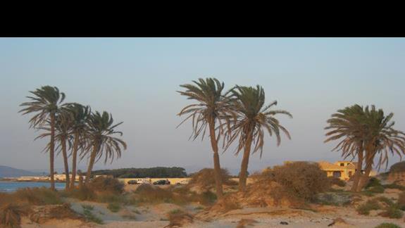 Okolice naszej plazy