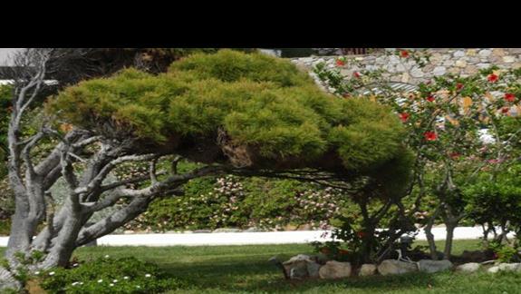 Mitsis Ramira Beach - ogród