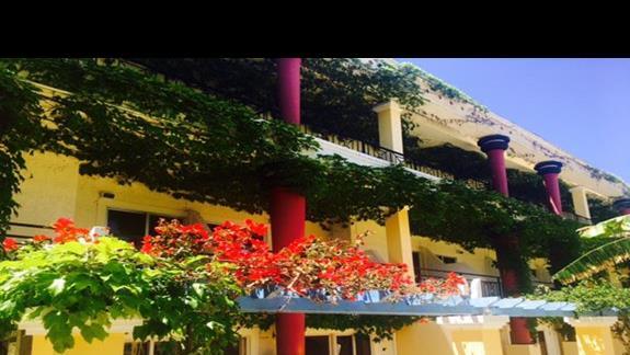 Dużo kwiatów i zieleni  na terenie hotelu Apollon