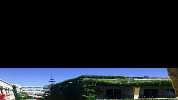 Bujny ogród  w hotelu Apollon