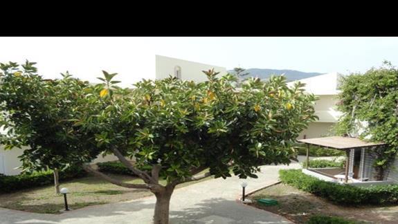 Kipriotis Village - teren hotelu