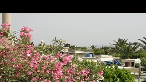 Kipriotis Village - ogród