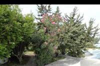 Hotel Ammos - Ammos - ogród