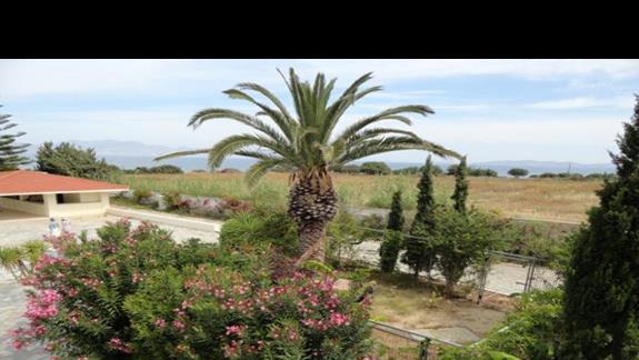 Ammos - ogród