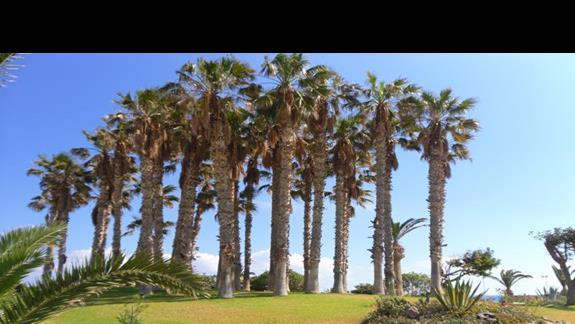 Lyttos Beach ogórd