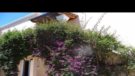 kolorowe kwiaty ozdabiające domki