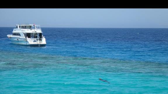 Odwiedziny delfina