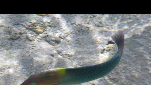 Takie rybki mozna podziwiac w morzu przy hotelu