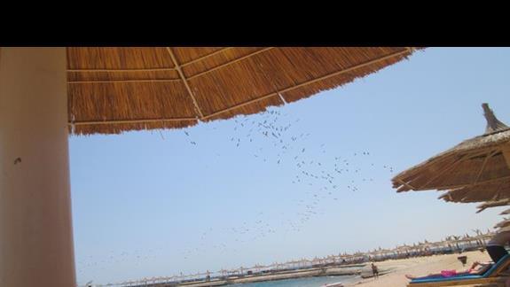 Plaża, morze, ptaki, spokój, cisza.... Czego więcej chcieć?