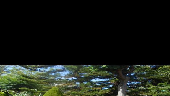 Ogród przy hotelu