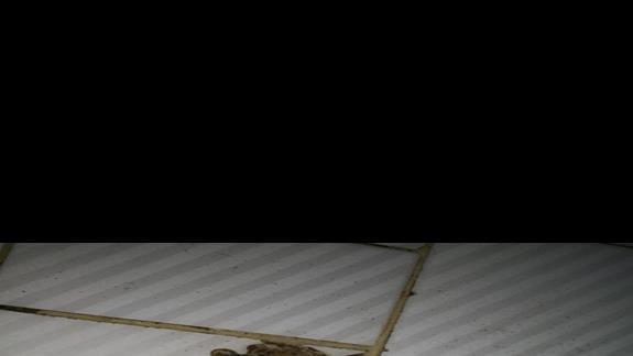 kratka sciekowa na srodku lazienki, podloga tak wyprofilowana, ze zostaje zawsze 2 cm wody