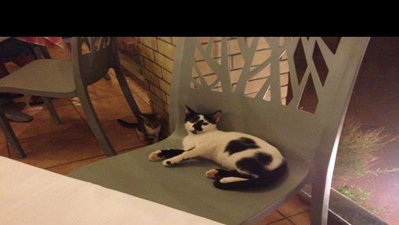 Kot restauracyjny