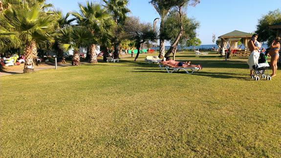 Trawnik przy plaży