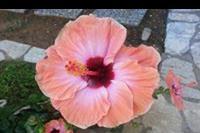 Hotel Lido Corfu Sun - Hotelowy kwiatek ;)
