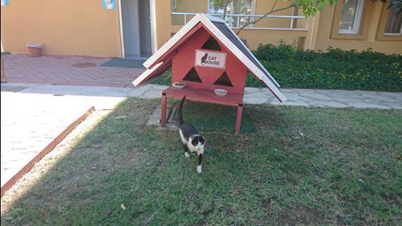 Cat house :)