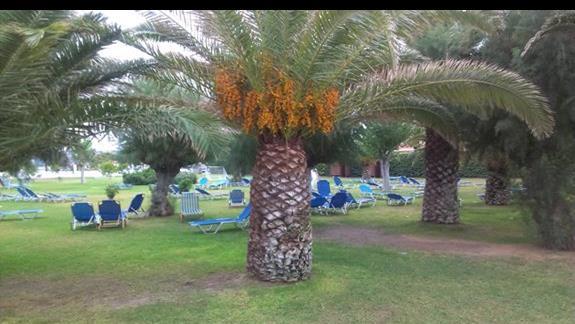 Palmowy ogród